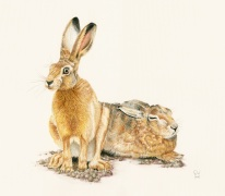 1_hare_brown_two