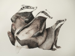 badgers aquarel