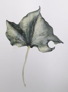 hedera-blad-aquarel
