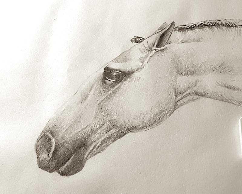 1_horsehead