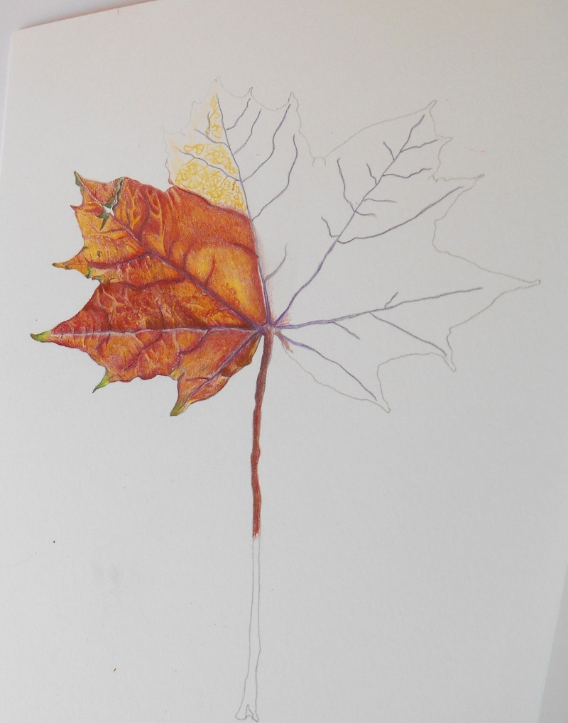autumn-leaf-1