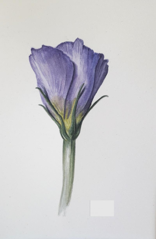 botanische-aquarel
