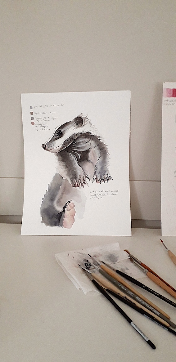 daily-sketch-badger-aquarl