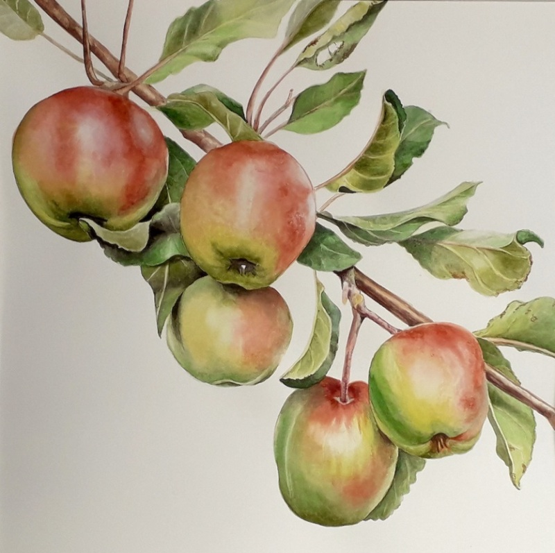 hanging-apples