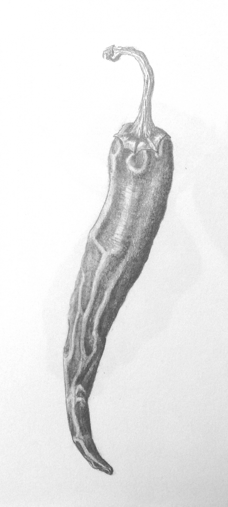 red-pepper-pencil-