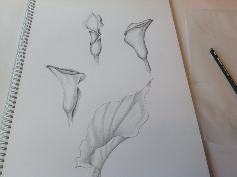 sketches-calla