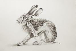 1_brown-hare-pencil