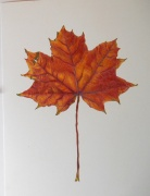 autumn-leaf-3