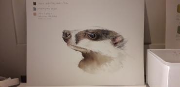 badger-in-progress