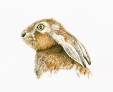 hare_brown_ears_flat
