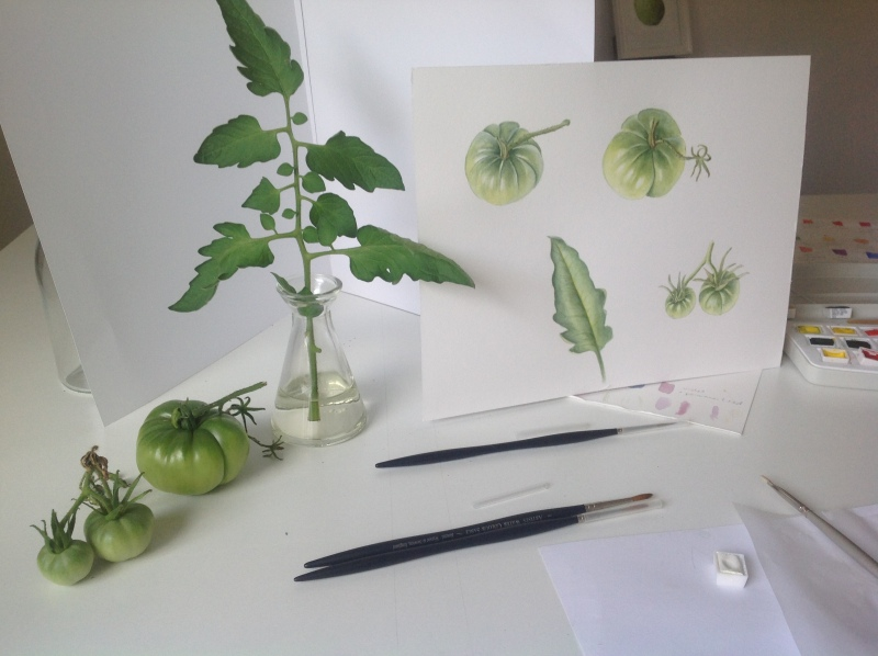 tomato-aquarel