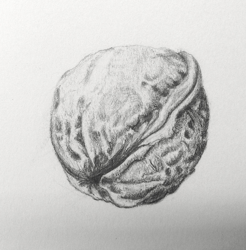 walnut-pencil