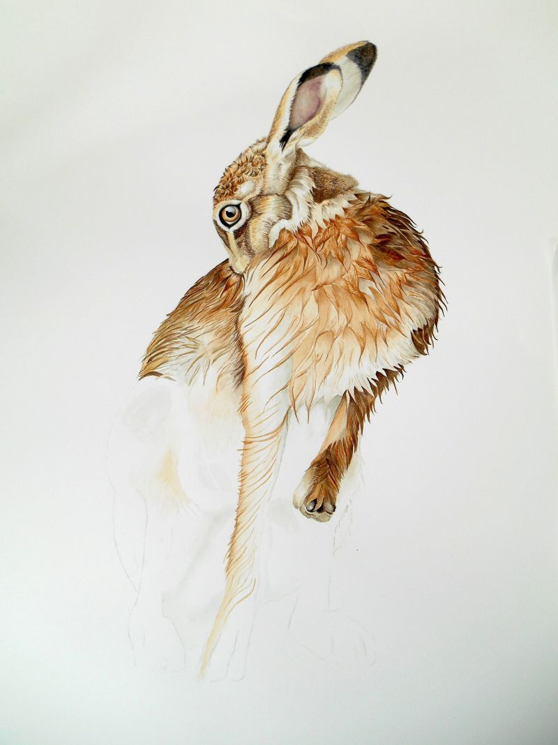 hare-grooming-making-2