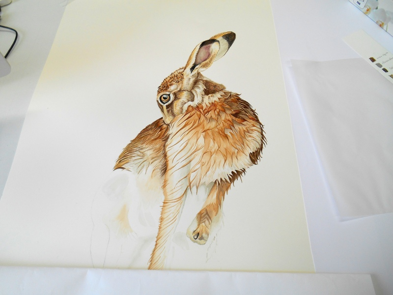 hare-grooming-making
