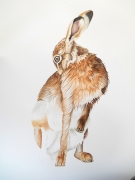 hare-grooming-making-3
