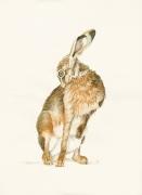 hare_brown_grooming