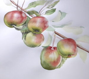 apples hanging on tree branch