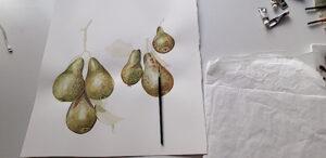 aquarel of pears on tree branch