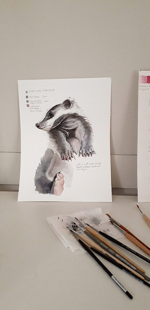 daily badger sketch