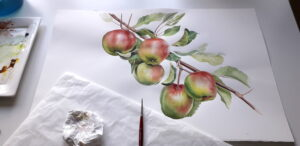 hanging apples on tree