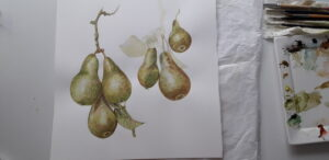aquarel of pears hanging on a tree branche