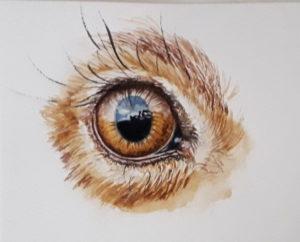 eye hare aquarel