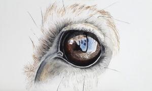 eye deer aquarel