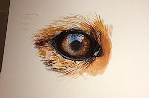 eye fox aquarel