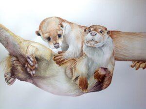 otters aquarel