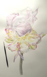 botanical aquarel peony